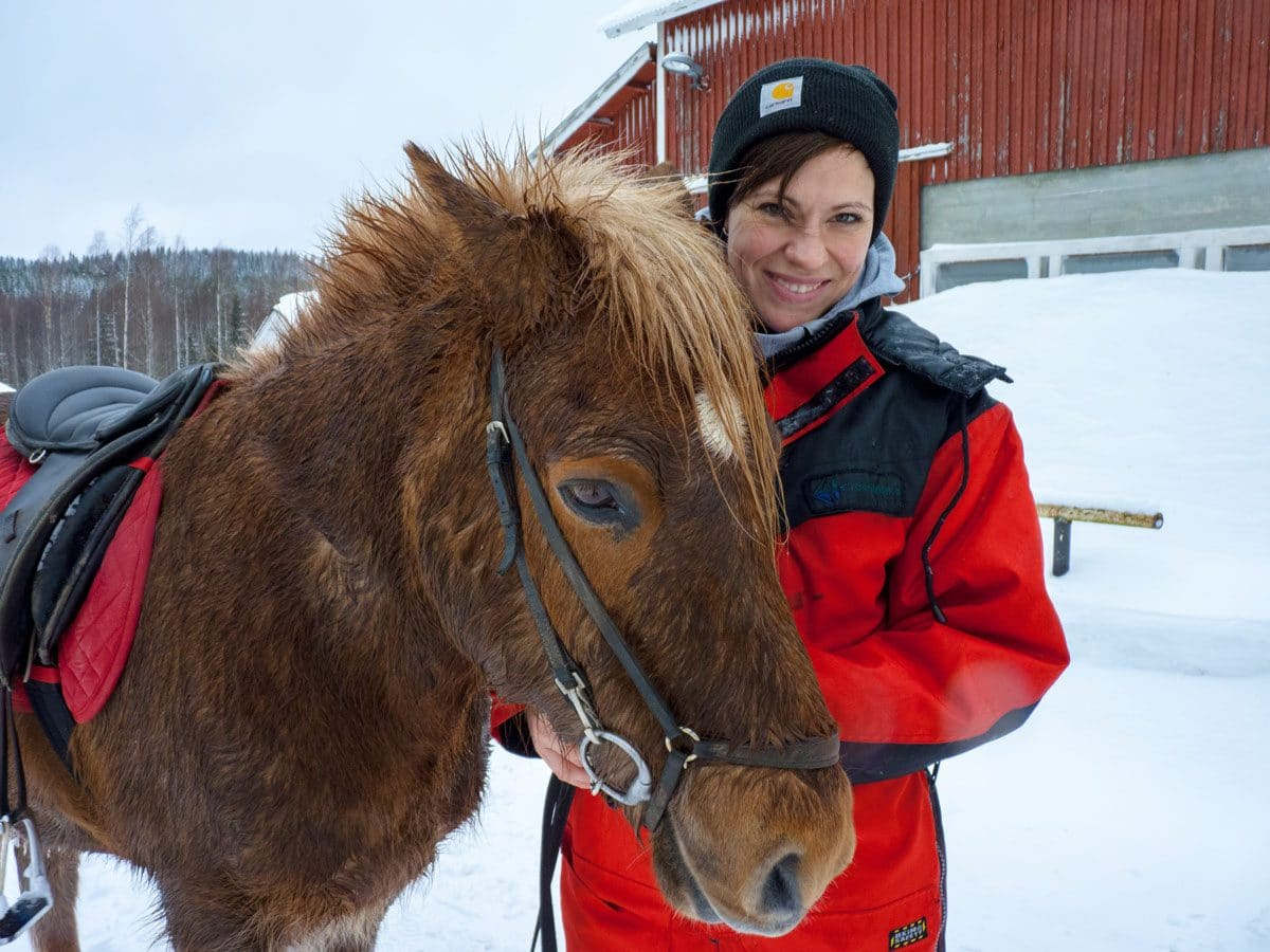 Islandpferde in Finnland reiten