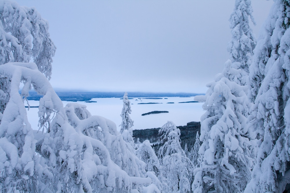 Nationalpark Finnland Koli